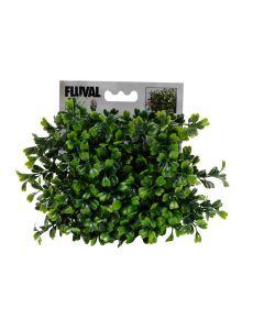 Fluval Chi Plant Boxwood