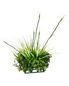 Fluval Chi Plant Boxwood & Tall Grass