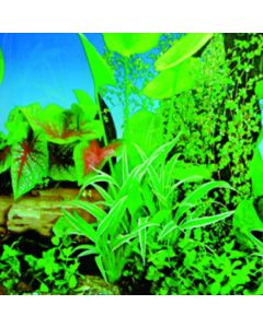 """YML Lush Paradise Background [19"""" - Sold per ft]"""