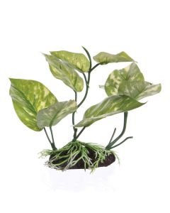 "Fluval Lizard's Tail Plant [6.75""]"