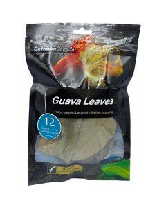 Catappa Canada Guava Leaves [12 Pack]