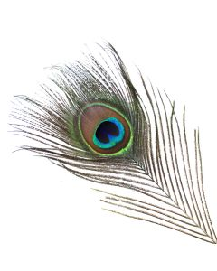 Vee's Natural Peacock Feather