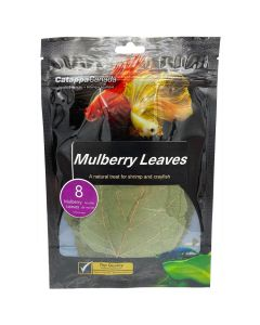 Catappa Canada Mulberry Leaves [8 Pack]