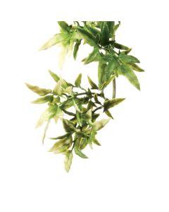 Exo Terra Croton Plant Small