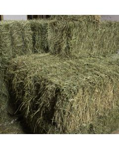 Double Compressed Timothy Hay Bale