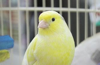 Budgie, Canary, Cockatiel, Lovebird, Conure, Parrot