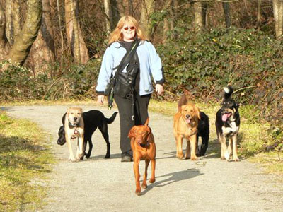 Dog Training in Victoria: Hot Diggity Dogs!